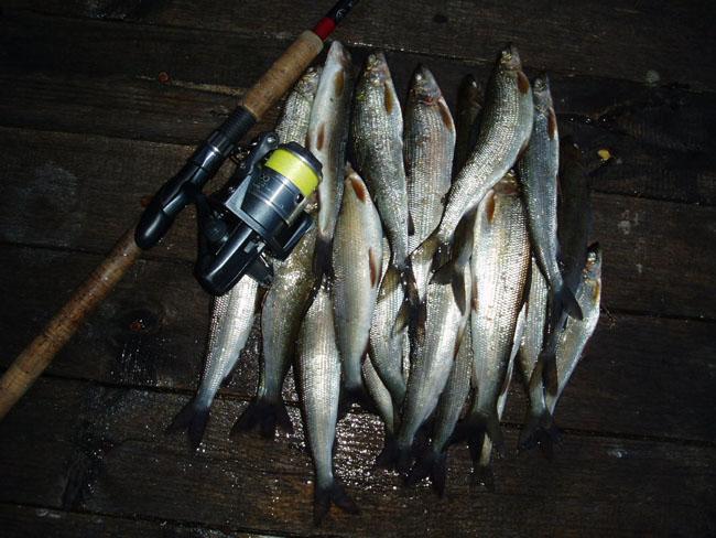 лосося лучше ловить
