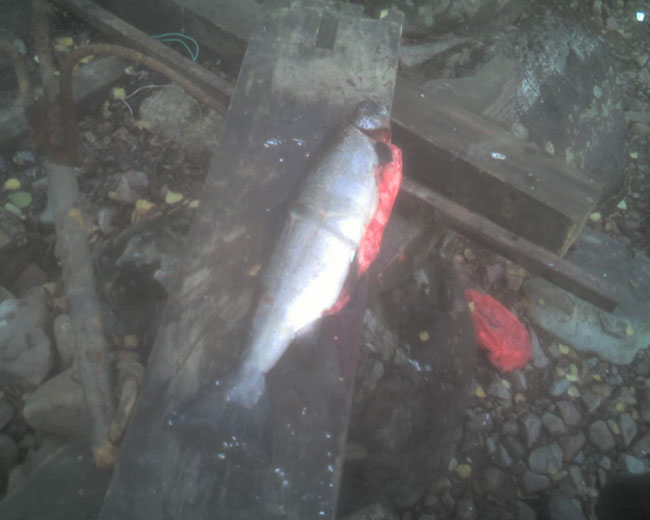 рыбалка на онеге сайт